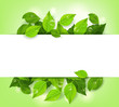 Realistic Leaves Background with White Space - 79362765