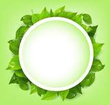 Fototapety Realistic Leaves Background with White Space