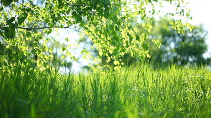 Summer park. Green grass, leaves and sunrays