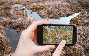 tourist taking photo of swamp in Arctic tundra