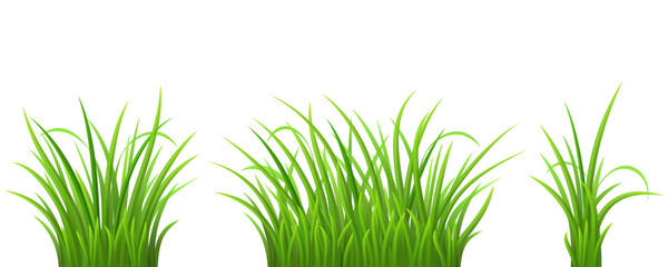 Green grass set on white, vector illustration