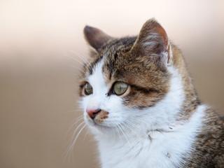 幼い猫の顔