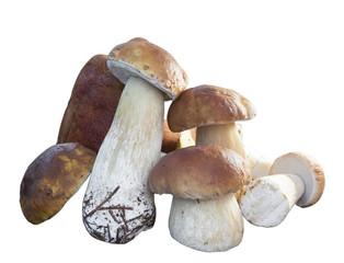 Harvested wild porcini mushrooms on wood suface