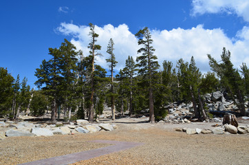 Forest near by the Lake Tahoe, Nevada, USA