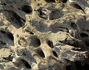 old olive wood