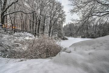 Central Park, New York City wonter