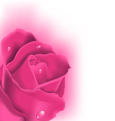 Celebration card with pink rose, copy space for your text