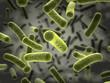 Leinwanddruck Bild - Bacteria