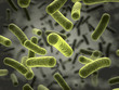 Leinwandbild Motiv Bacteria