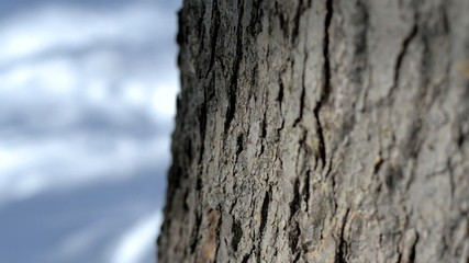 Bark of oak tree. Camera moves from right to left.