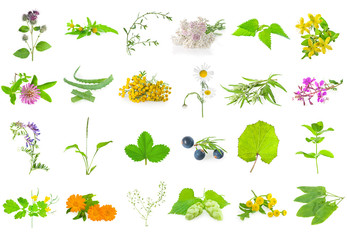 Set of medicinal herbs and berries, isolated on white.