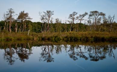 Bomen in bosmeer