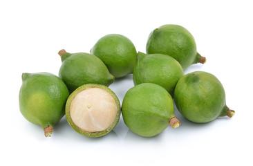 fresh macadamia nut on white background