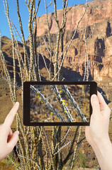 taking photo of cactus in Grand Canyon mountains