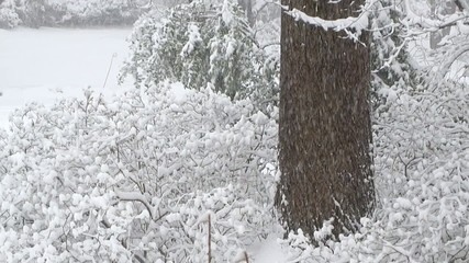 intense snow storm on bushes and tree (slow-motion)