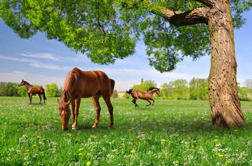 Herd of horses in a spring landscape