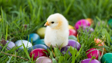 Lovely Easter Chick