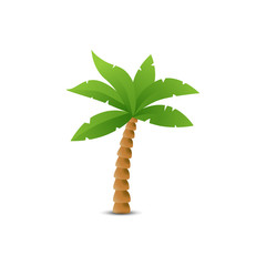 Tropical palm isolated on white