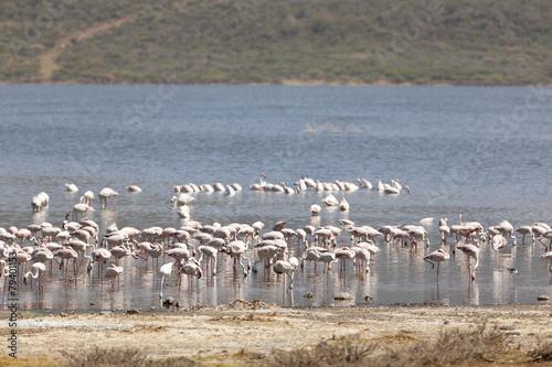 Foto op Aluminium Flamingo Flamingos at Lake Bogoria, Kenya