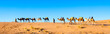 Camel caravan on the Sahara desert in Morocco - 79401790