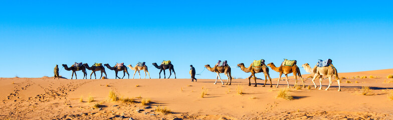 Camel caravan on the Sahara desert in Morocco