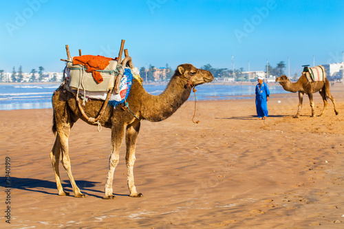 Fotobehang Marokko Camels on the beach in Essaouira, Morocco