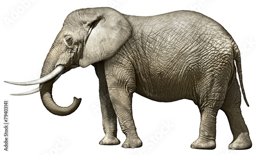 Elephant - 79403141