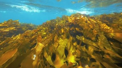 Sea kelp in slow motion.
