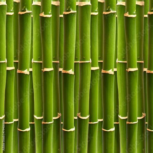 In de dag Bamboo Bambus Wald Textur Hintergrund