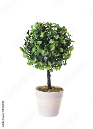 Plexiglas Bonsai Decorative Plant in the Pot Isolated