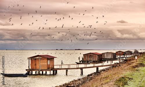 laguna del Delta del Po - 79410573