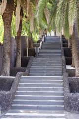 von Palmen gesäumte Treppe