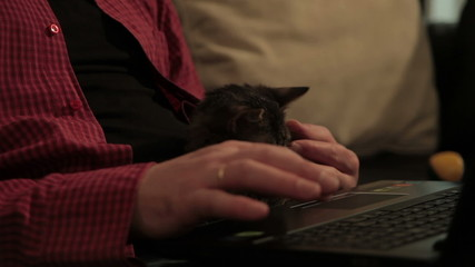 Man sitting, playing with cat and typing on laptop. Close up.