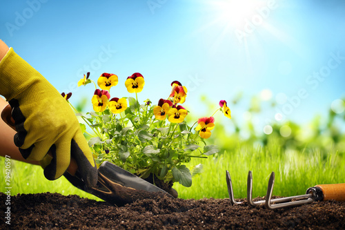 Planting Flowers in a garden - 79420597