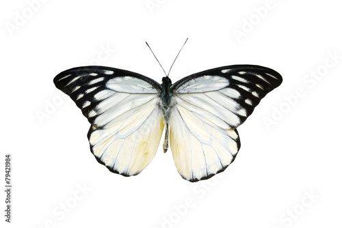 Fotobehang Vlinder colorful butterfly isolated on white