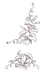 Vector design element of flowers with curls