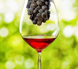 Glass of red wine and bunch of grapes on nature background