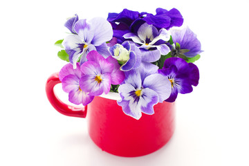 beautiful pansy flowers isolated in a red mug