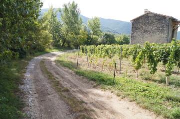 chemin à côté des vignes
