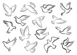 Fototapety Pigeon and dove birds silhouettes