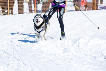 The skier with a dog