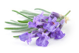Fototapety A bunch of lavender flowers on a white background