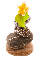 fleur de plumeria et feuille sur pyramide de galets