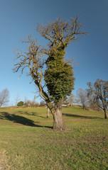 Panorama Laubbaum