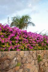 Tropical stone wall