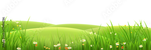 Meadow, green grass and flowers , vector illustration - 79444786
