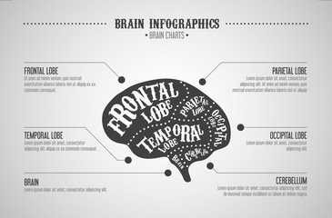 Brain infographics concept. Vector cuts diagram vintage style.