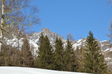 alberi e montagna