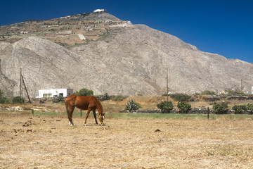 horse grazing on Santorini
