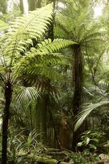 Jungle fern trees